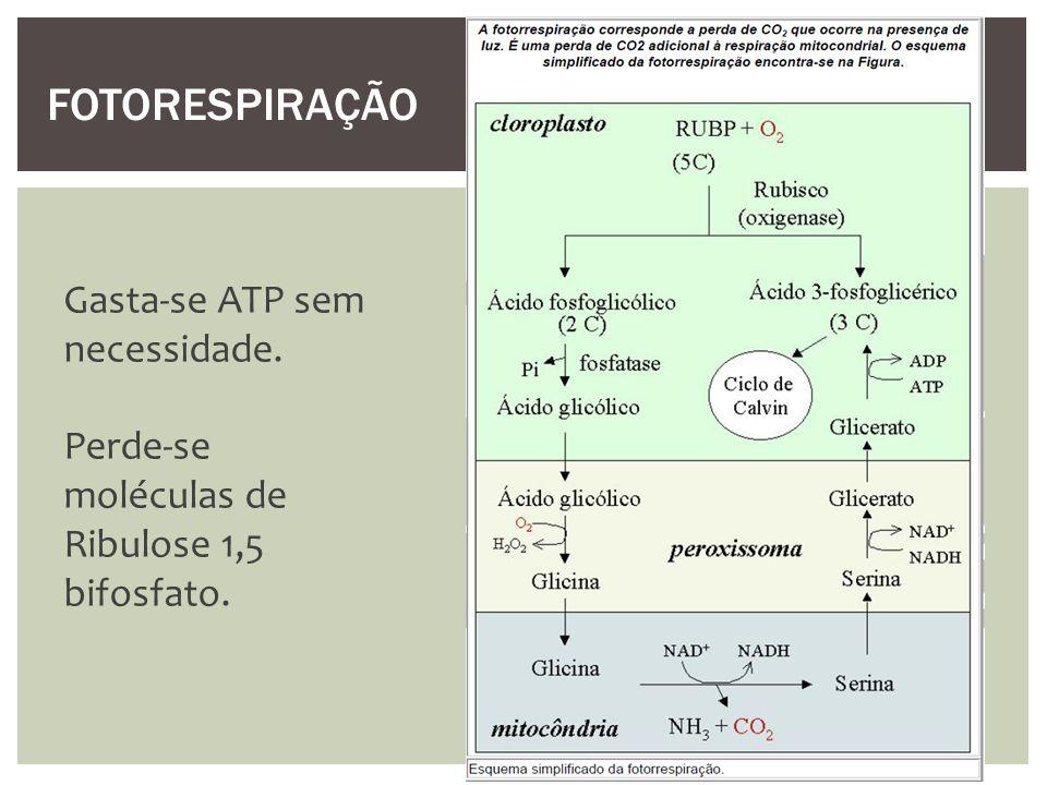 Gasta-se ATP sem necessidade. Perde-se moléculas de Ribulose 1,5 bifosfato. FOTORESPIRAÇÃO
