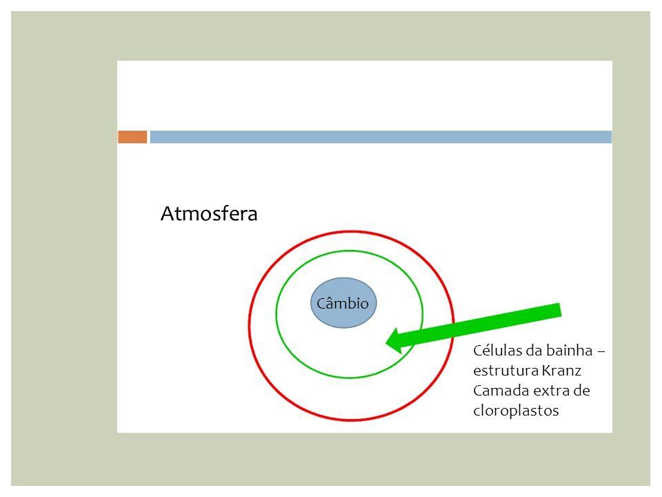 Células da bainha – estrutura Kranz Camada extra de cloroplastos Atmosfera Câmbio