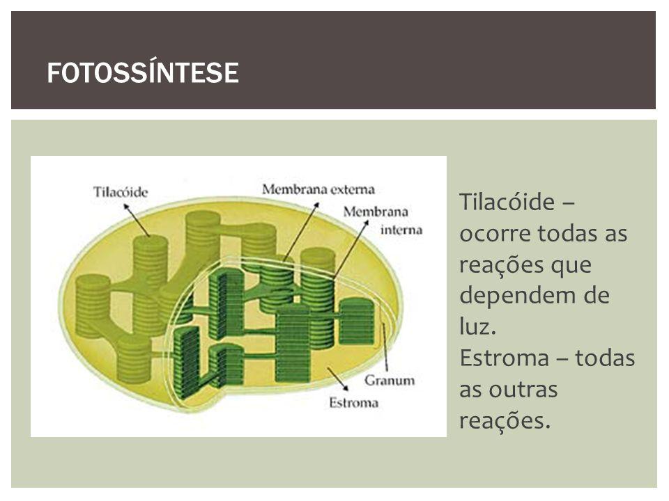 Tilacóide – ocorre todas as reações que dependem de luz. Estroma – todas as outras reações. FOTOSSÍNTESE