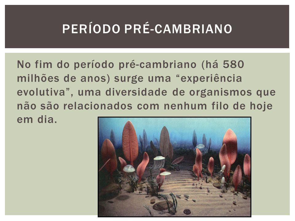 No fim do período pré-cambriano (há 580 milhões de anos) surge uma experiência evolutiva, uma diversidade de organismos que não são relacionados com n