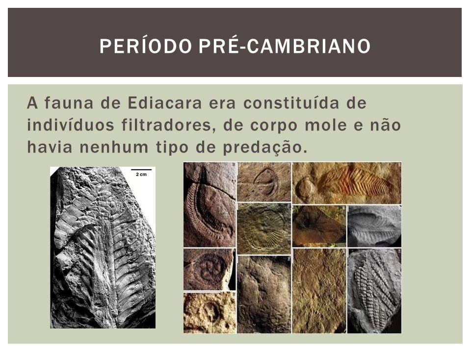 A fauna de Ediacara era constituída de indivíduos filtradores, de corpo mole e não havia nenhum tipo de predação. PERÍODO PRÉ-CAMBRIANO