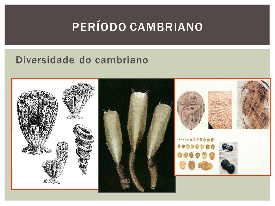 Diversidade do cambriano PERÍODO CAMBRIANO