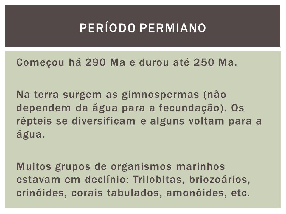 Começou há 290 Ma e durou até 250 Ma. Na terra surgem as gimnospermas (não dependem da água para a fecundação). Os répteis se diversificam e alguns vo