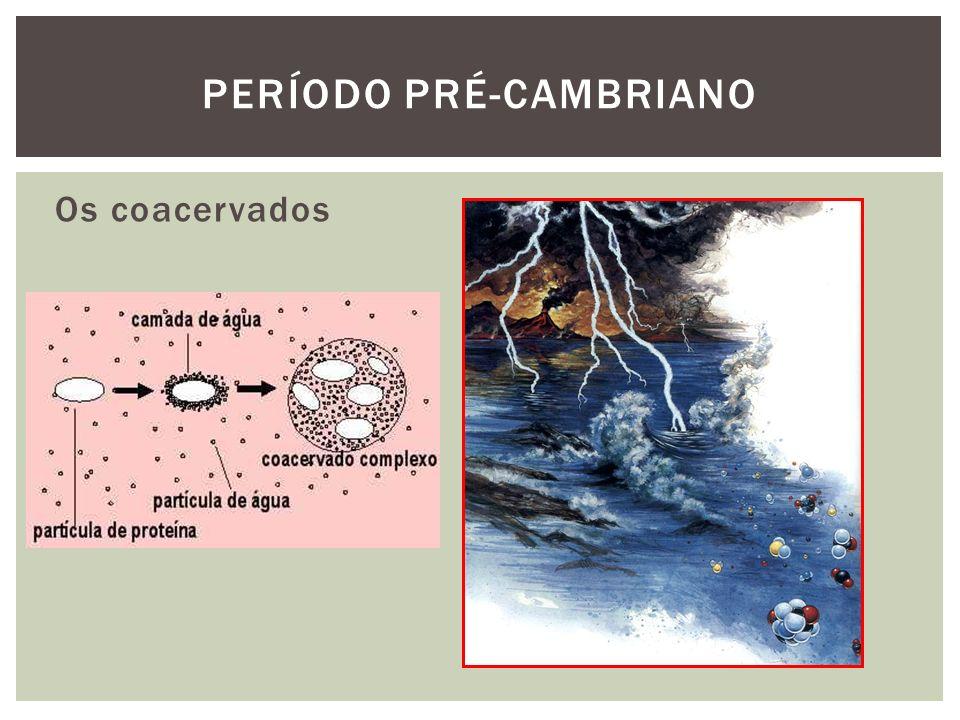 Os coacervados PERÍODO PRÉ-CAMBRIANO