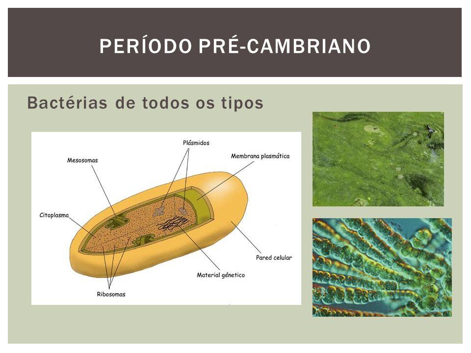 No fim do cambriano há uma elevação do nível do mar e extinção de gastrópodes, trilobitas e esponjas.