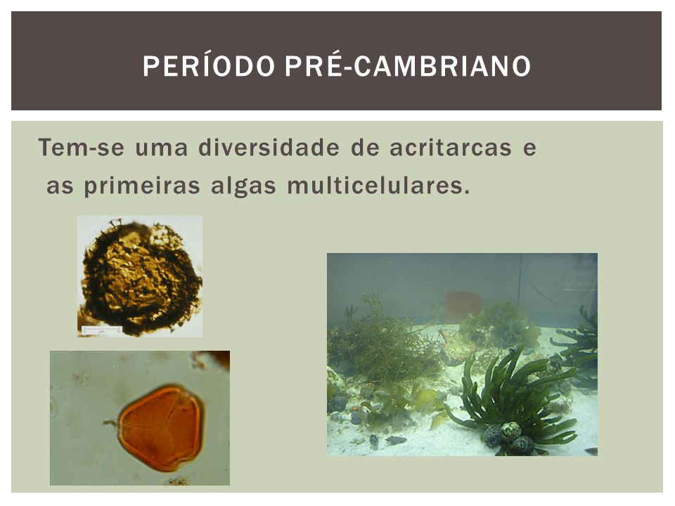 Tem-se uma diversidade de acritarcas e as primeiras algas multicelulares. PERÍODO PRÉ-CAMBRIANO