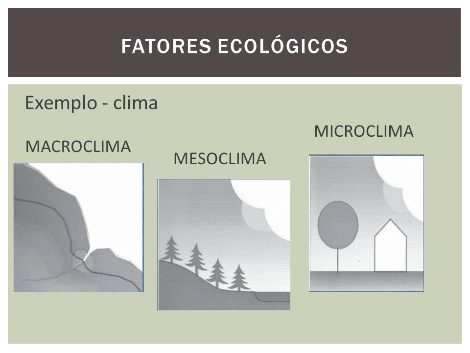 FATORES ECOLÓGICOS MICROCLIMA MESOCLIMA MACROCLIMA Exemplo - clima
