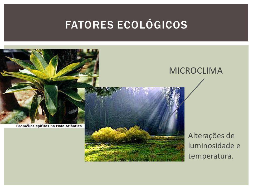 FATORES ECOLÓGICOS MICROCLIMA Alterações de luminosidade e temperatura.