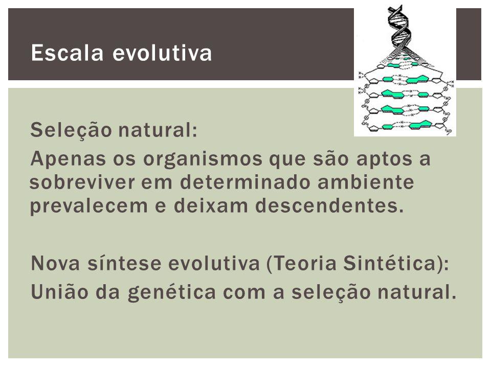 Escala evolutiva Seleção natural: Apenas os organismos que são aptos a sobreviver em determinado ambiente prevalecem e deixam descendentes. Nova sínte