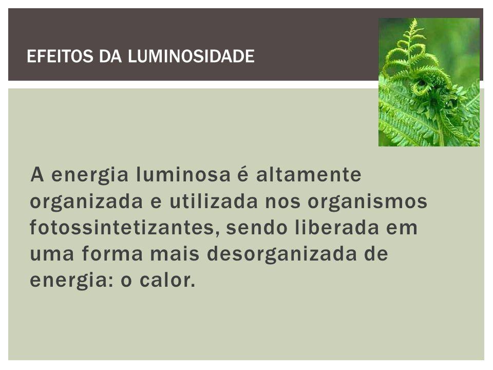 A energia luminosa é altamente organizada e utilizada nos organismos fotossintetizantes, sendo liberada em uma forma mais desorganizada de energia: o