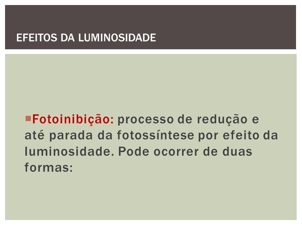 Fotoinibição: processo de redução e até parada da fotossíntese por efeito da luminosidade. Pode ocorrer de duas formas: EFEITOS DA LUMINOSIDADE
