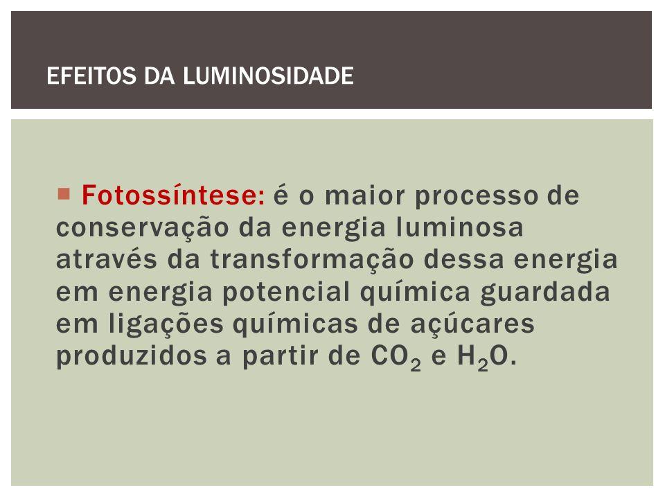 Fotossíntese: é o maior processo de conservação da energia luminosa através da transformação dessa energia em energia potencial química guardada em li