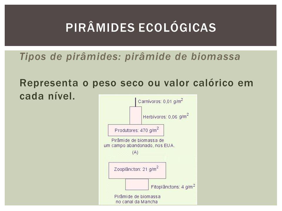 Tipos de pirâmides: pirâmide de biomassa Representa o peso seco ou valor calórico em cada nível. PIRÂMIDES ECOLÓGICAS