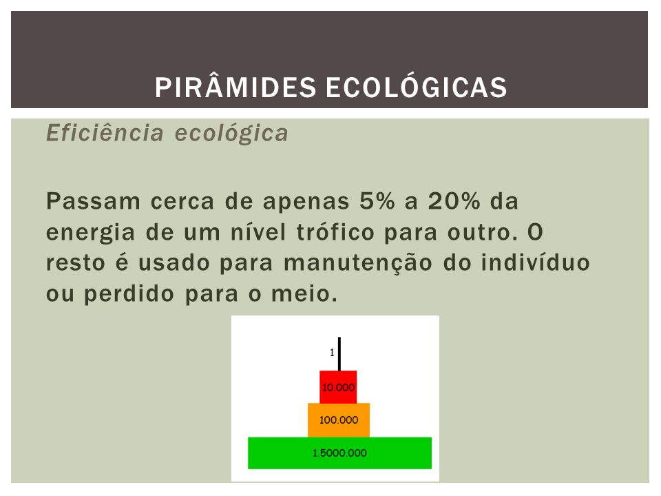 Eficiência ecológica Passam cerca de apenas 5% a 20% da energia de um nível trófico para outro. O resto é usado para manutenção do indivíduo ou perdid