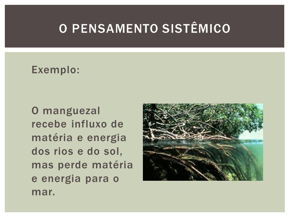 Exemplo: O manguezal recebe influxo de matéria e energia dos rios e do sol, mas perde matéria e energia para o mar. O PENSAMENTO SISTÊMICO