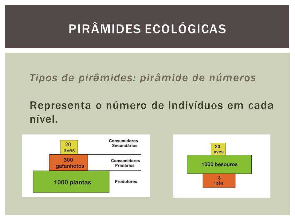 Tipos de pirâmides: pirâmide de números Representa o número de indivíduos em cada nível. PIRÂMIDES ECOLÓGICAS
