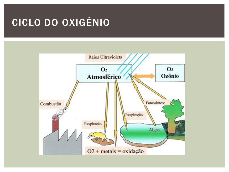 Estoques e fluxos CICLO DO OXIGÊNIO