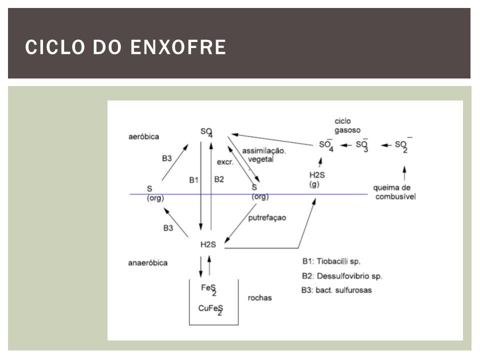 O maior estoque de enxofre é indisponível, situado em rochas como sulfatos ou sulfetos minerais (CaSO 4, FeS 2 ).