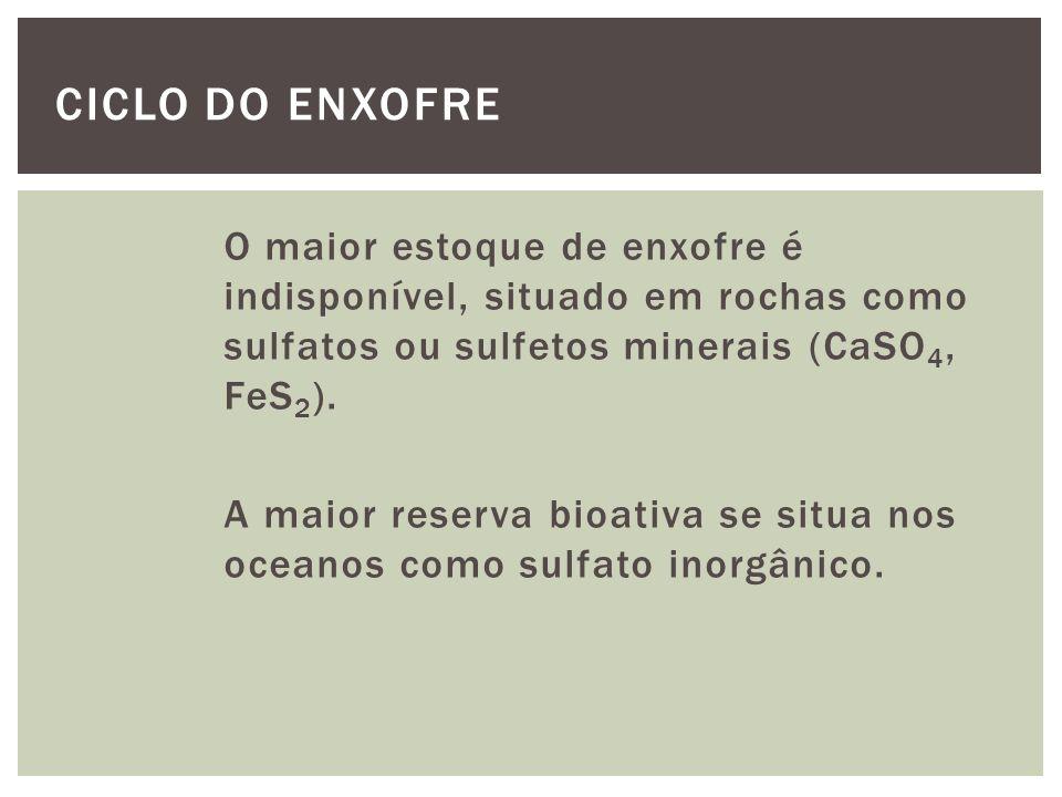 Algumas transformações biológicas: Assimilação de sulfatos minerais por produtores primários e conversão em compostos orgânicos.