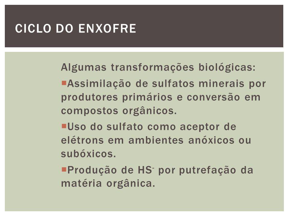 Algumas transformações biológicas: Oxidação de HS - em ambiente anóxico catalisada por bactérias fotossintéticas anoxigênicas.
