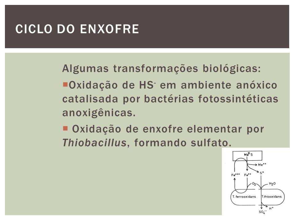 Algumas transformações biológicas: Produção de DMS (dimetil sulfeto) por algas marinhas a partir do DMSP.