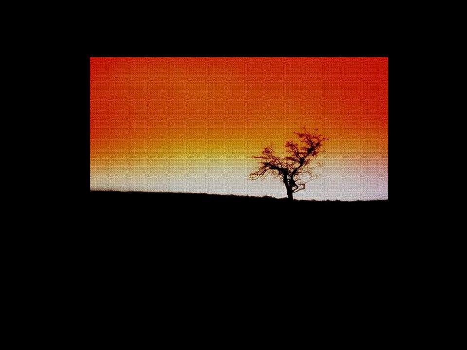 O deserto é uma metáfora.