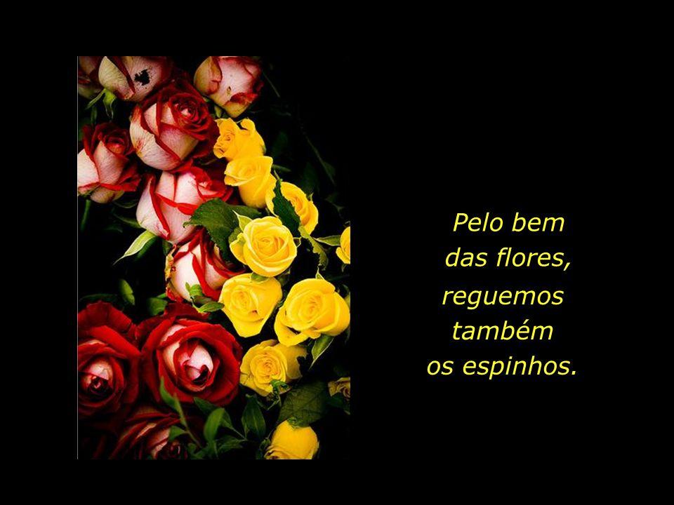 A rosa não seria rosa, se lhe faltassem os espinhos.
