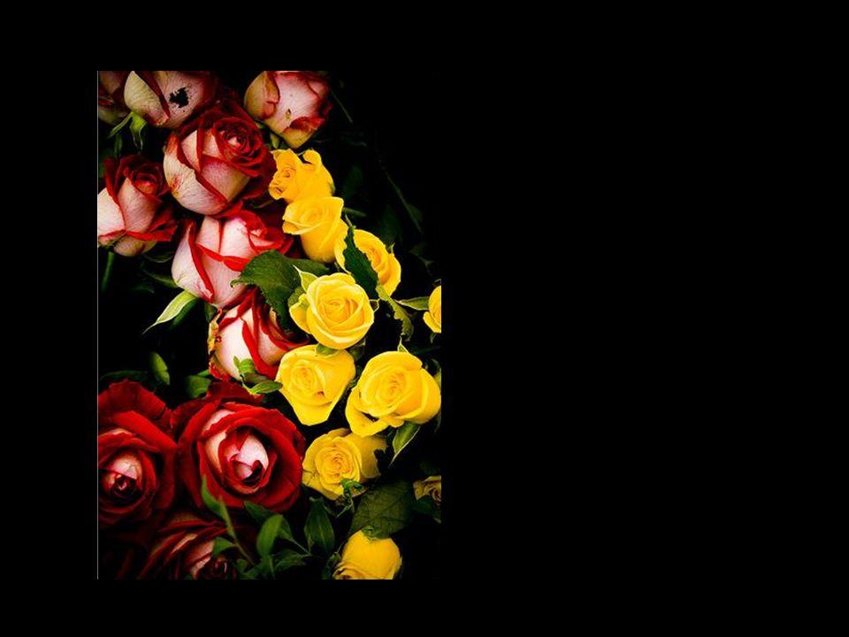 Pelo bem das flores, reguemos também os espinhos.