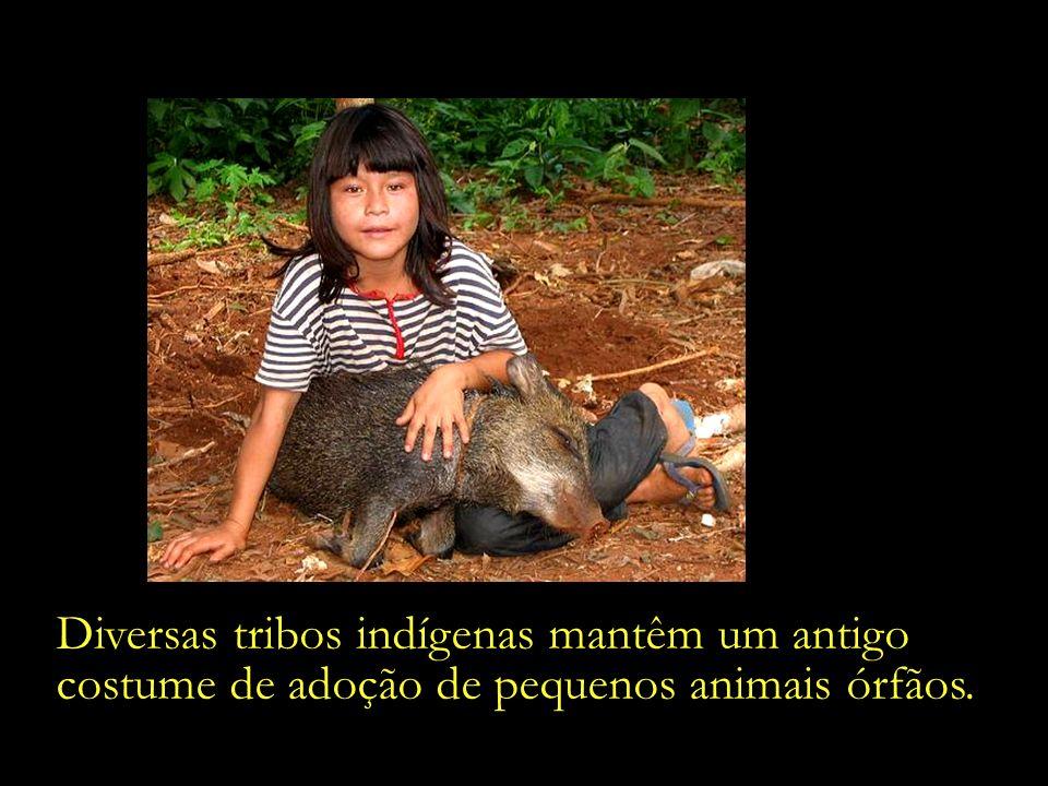 Menina da etnia Ache brinca com um filhote de porco-do-mato. - Canindeyú, Paraguai