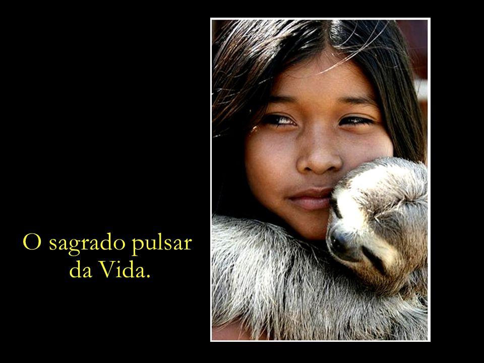 Porcos-do-mato, quatis, macacos, preguiças e aves – criados como se fossem parte da família.