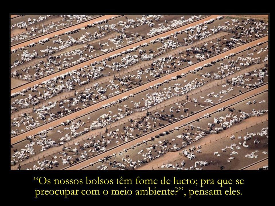 O nosso gado tem fome, dizem os milionários mecenas dos agronegócios.