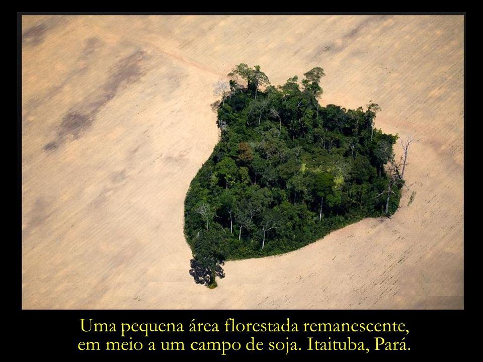 Onde um dia reinava a floresta, o trator prepara o terreno para a soja que vai ser plantada.