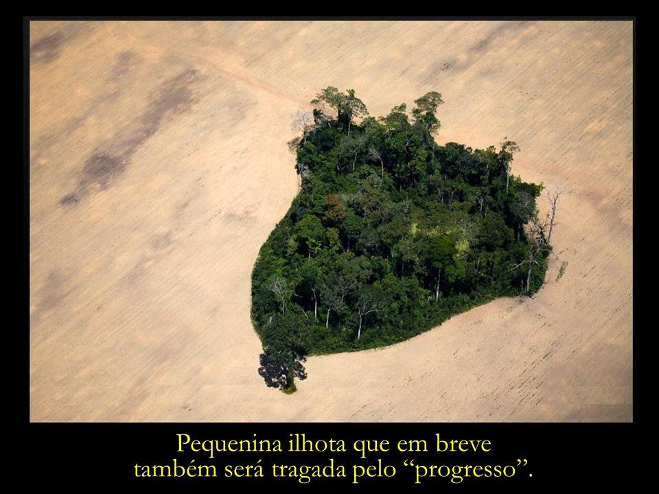 Voraz expansão das fronteiras agrícolas. Uma pequena área florestada remanescente, em meio a um campo de soja. Itaituba, Pará.