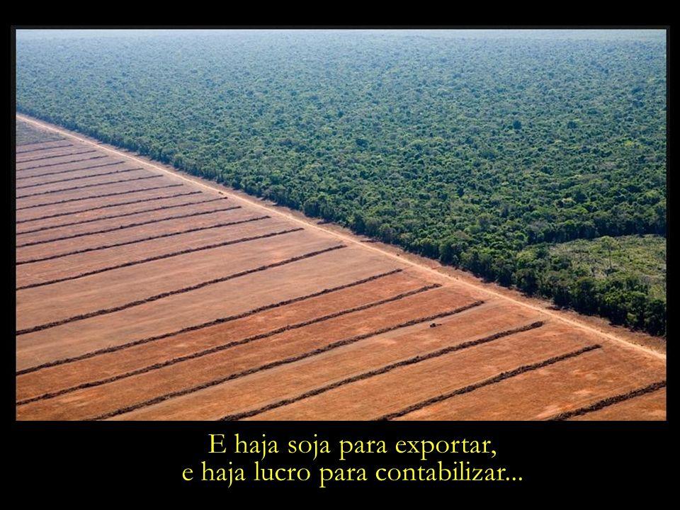 Voraz expansão das fronteiras agrícolas. Triste retrato dos nossos tempos...