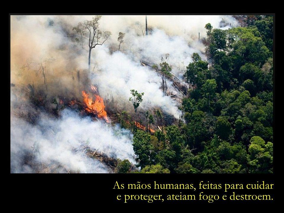 Área próxima à Floresta Nacional do Trairão. Município de Itaituba, Pará