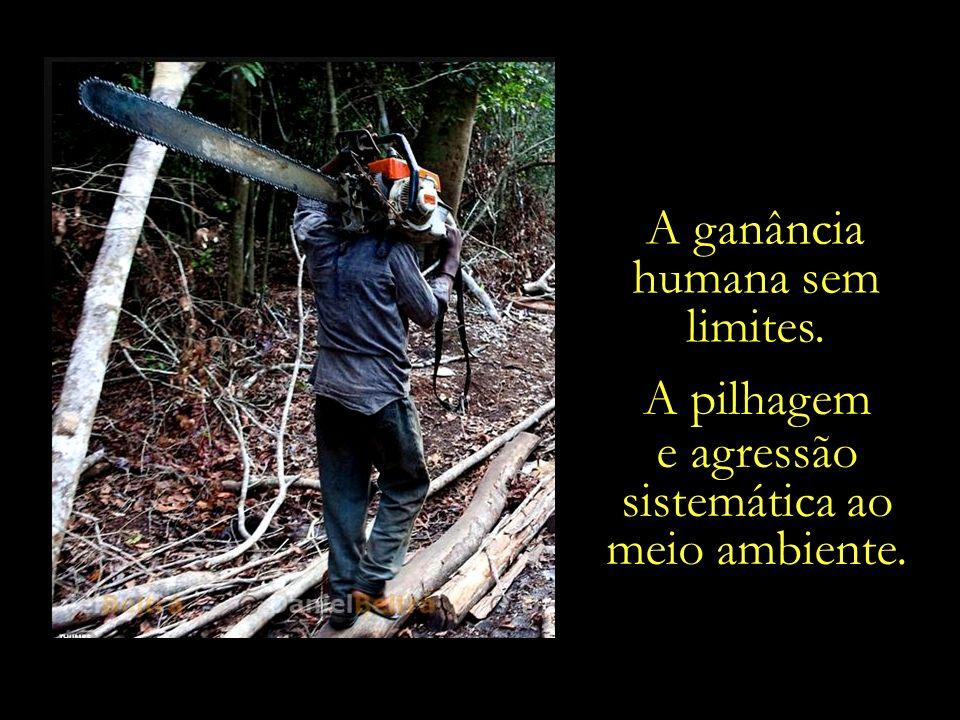 A ganância humana sem limites. A pilhagem e agressão sistemática ao meio ambiente.