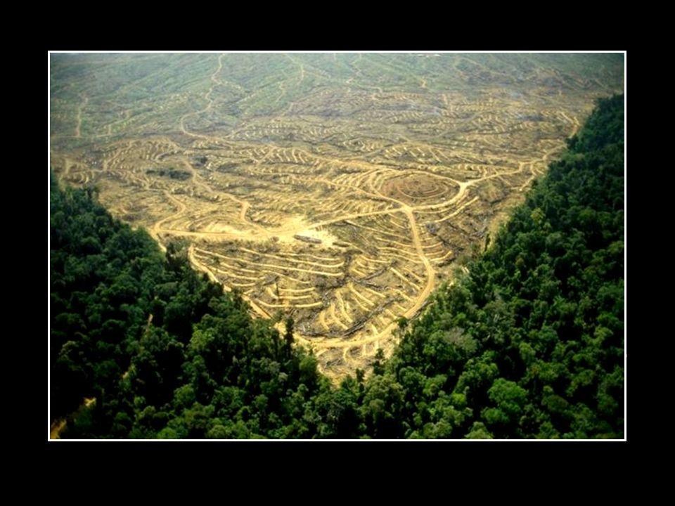 A pilhagem e agressão sistemática ao meio ambiente.
