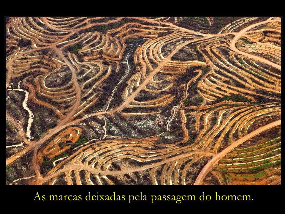 A ancestral sabedoria indígena nos ensina:...