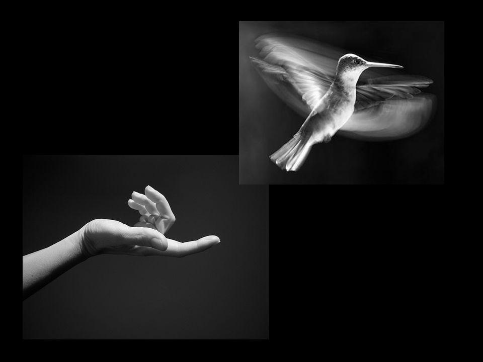 De modo que no dia em que a gaiola do nosso corpo fenecer, a ave da nossa alma possa voar livremente.