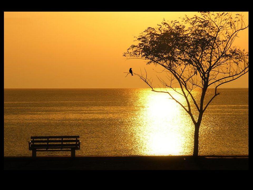 ...possamos alcançar as sublimes alturas e os horizontes mais límpidos. Tema musical: Kitaro, Dance of Sarasvati Formatação: um_peregrino@hotmail.com