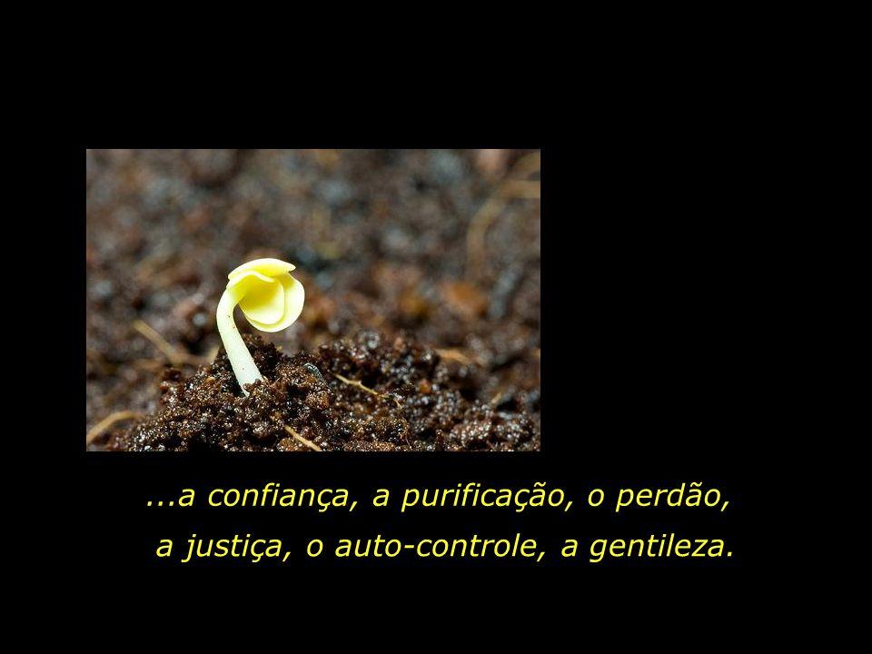 O amor, a alegria, a paz, a paciência, a bondade, a generosidade, a compaixão...,