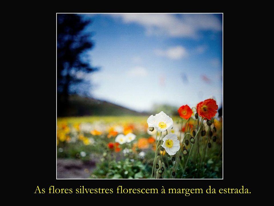 O Coração, a Ave e a Alma (ou simplesmente Metáfora) As flores silvestres florescem à margem da estrada.