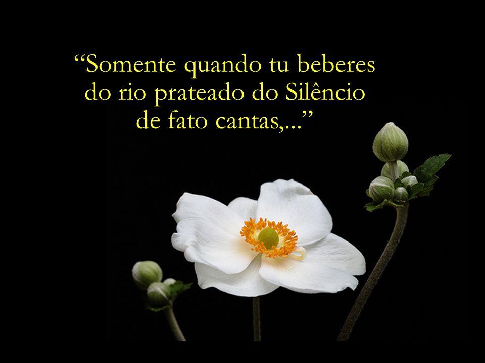 Ó Amigo, No jardim de teu coração, nada plantes salvo a rosa do amor... Baháulláh AAAAAAAAAAAAAAAA