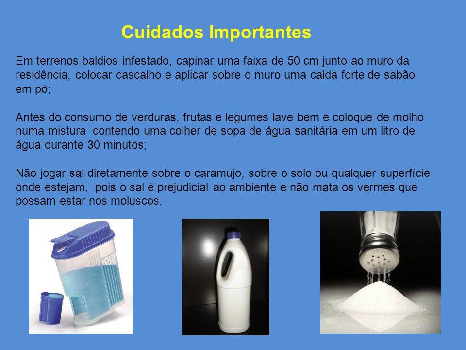 ATENÇÃO! Não use substâncias químicas tóxicas, pois você afetará outros organismos e as águas subterrâneas. Não use sal para matá-los, isso com o temp