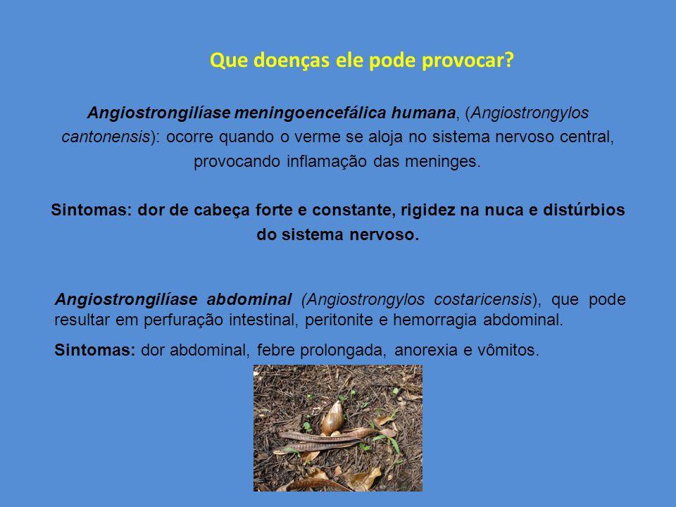 ALIMENTAÇÃO causa danos em plantações, hortas, jardins e até no armazenamento de grãos, podendo causar danos ambientais, econômicos e na saúde pública