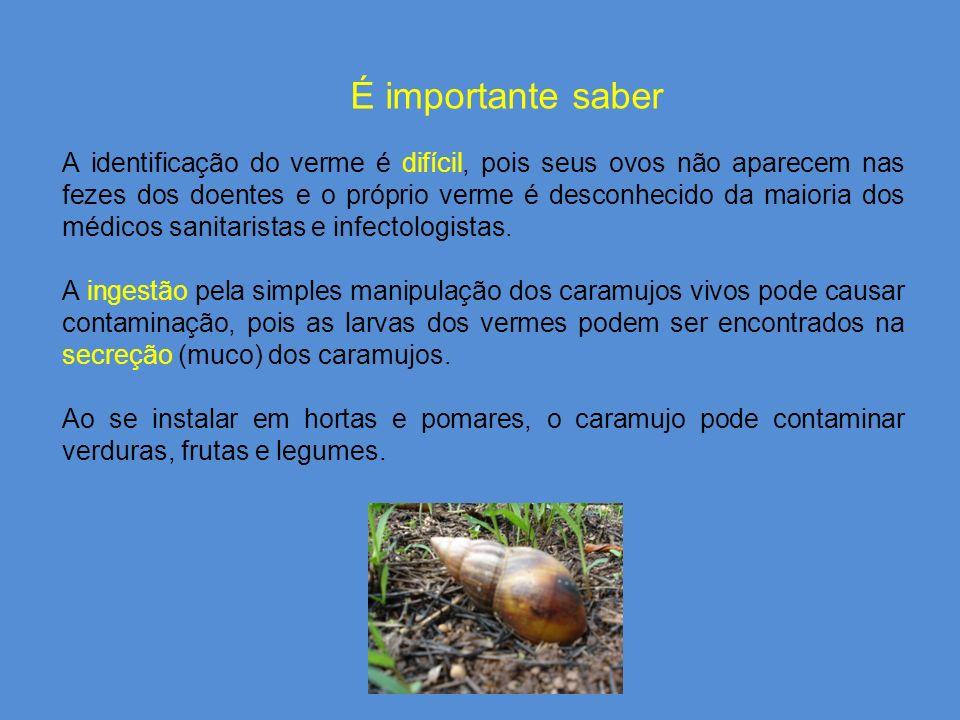 É importante saber A identificação do verme é difícil, pois seus ovos não aparecem nas fezes dos doentes e o próprio verme é desconhecido da maioria dos médicos sanitaristas e infectologistas.