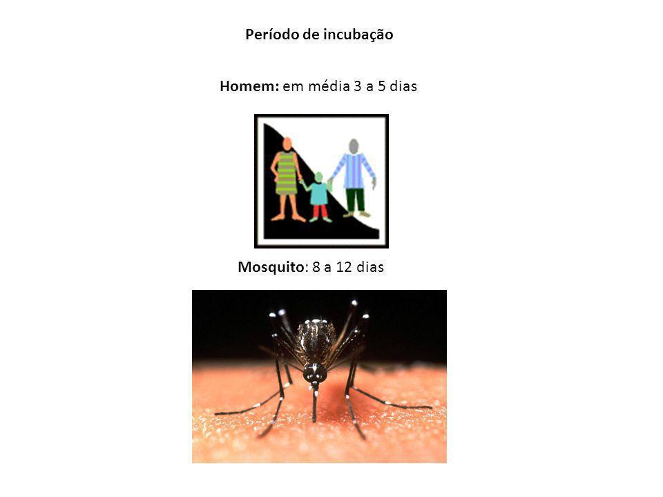 Modo de Transmissão pela picada do mosquito fêmea infectado Período de Transmissibilidade Um dia antes do aparecimento dos sintomas até o 6º dia de si