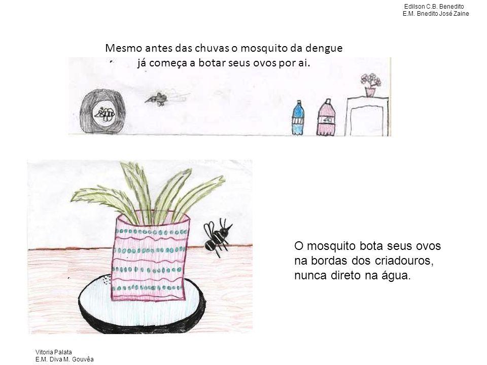 Mesmo antes das chuvas o mosquito da dengue já começa a botar seus ovos por ai.