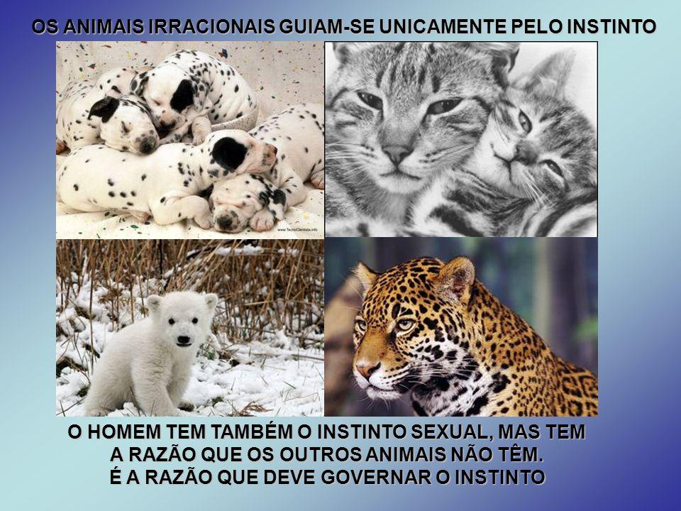 OS ANIMAIS IRRACIONAIS GUIAM-SE UNICAMENTE PELO INSTINTO O HOMEM TEM TAMBÉM O INSTINTO SEXUAL, MAS TEM A RAZÃO QUE OS OUTROS ANIMAIS NÃO TÊM.