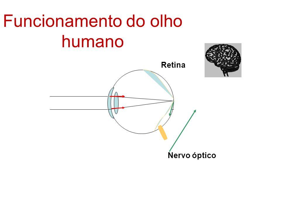 Retina Nervo óptico Funcionamento do olho humano
